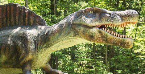 【恐竜プラン】大人気♪福井県立恐竜博物館チケット付・ホテルでのワンドリンク付<br>朝食ブッフェ付)